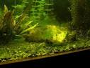 Types of aquarium algae with forum