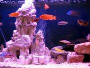 An article and discussion about decorating fish tanks