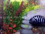 How to make DIY Aquarium Backgrounds