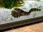 How to take care of Kuhli loaches with forum and images