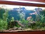 Types of CO2 systems for fish tanks with discussions