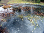 The purpose of a fish pond deicer and FAQ