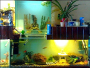 Creating a stunning fish tank display for your home