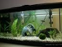 FAQ and answers when setting up a fish tank