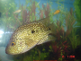 An article and forums about raising Texas cichlids