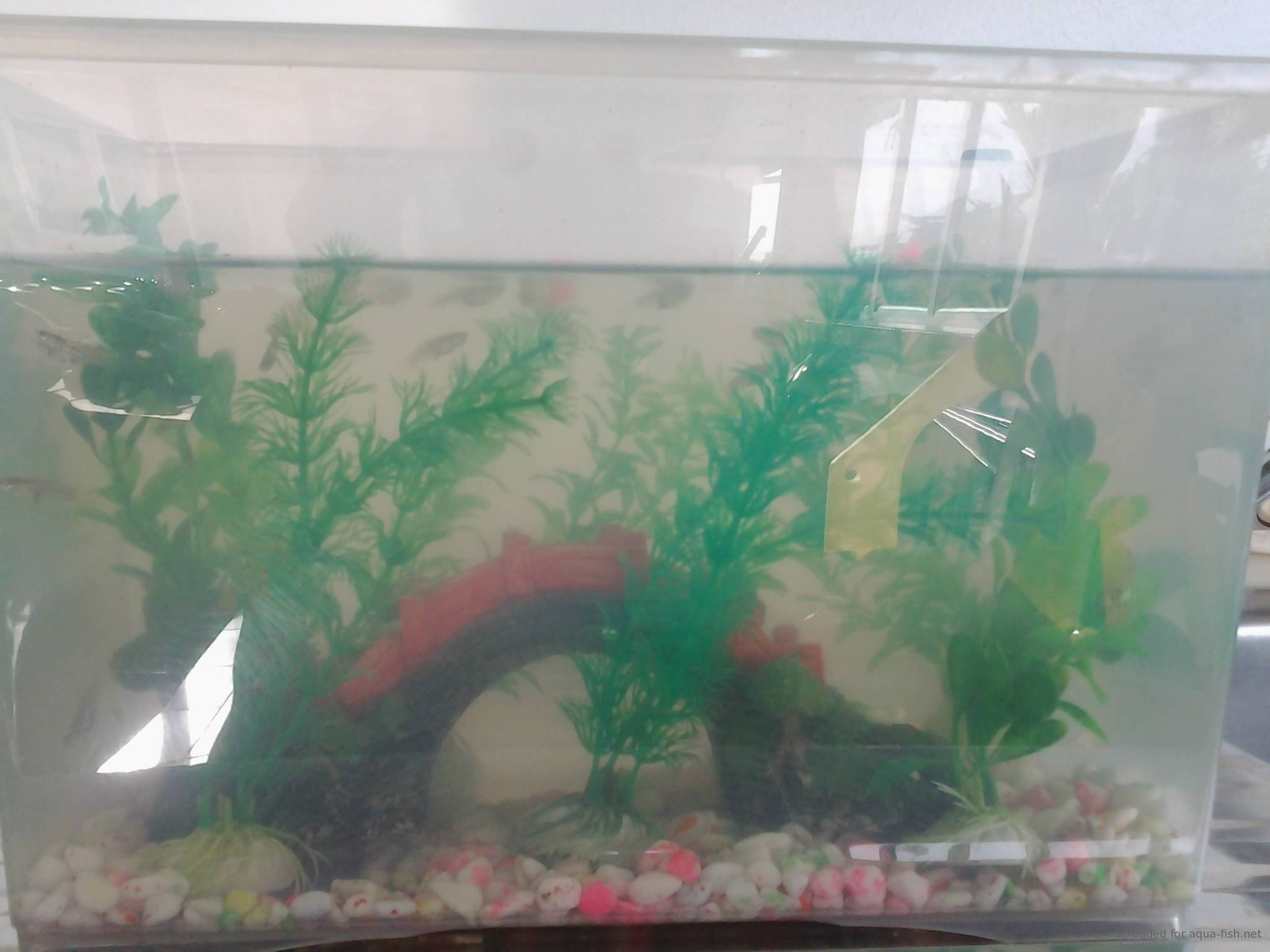 The guppy fish a guide and forum on breeding and care for Fish breeding net