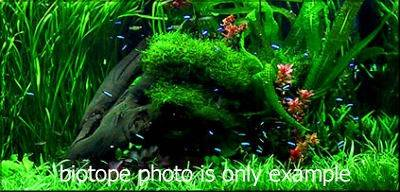 Photo of the biotope