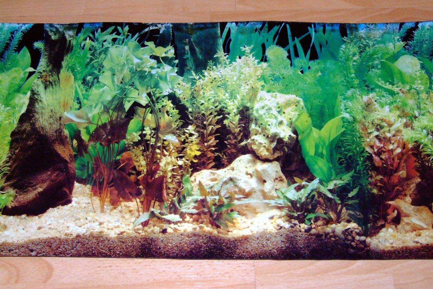 Fish tank painting - Aquarium Background Resized Image 1 Aquarium Background Resized Image 2