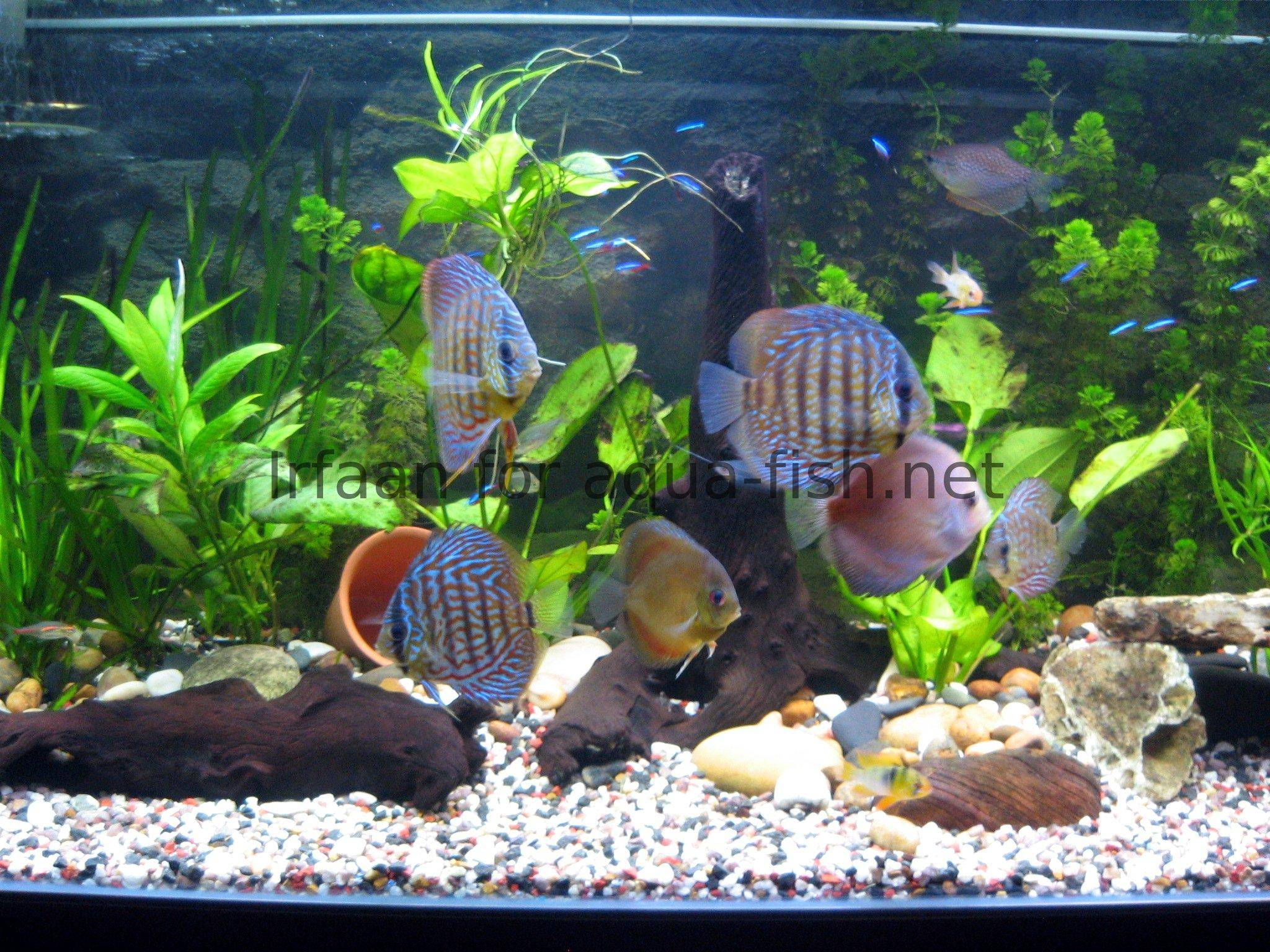 How to design an aquarium for Aquarium design