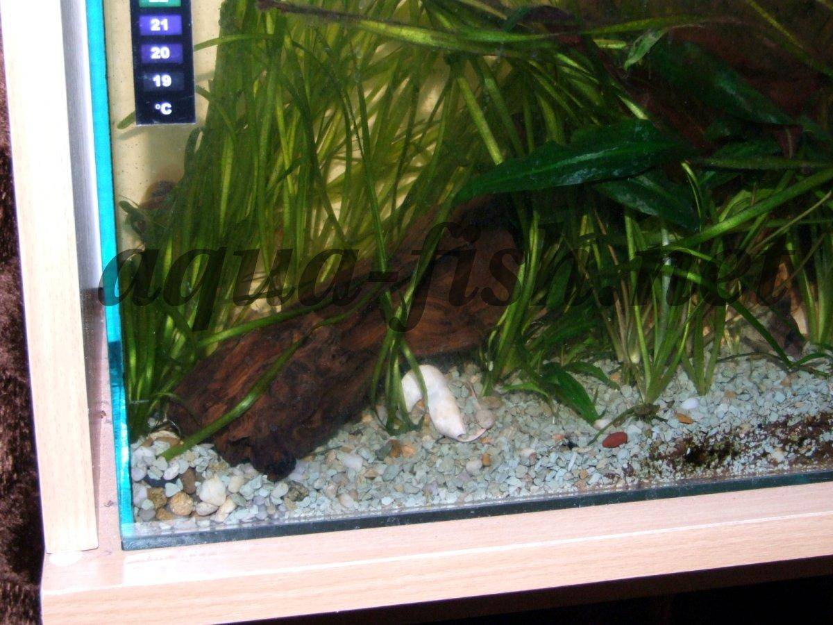 A guide and discussion on placing driftwood to an aquarium for Driftwood for fish tank