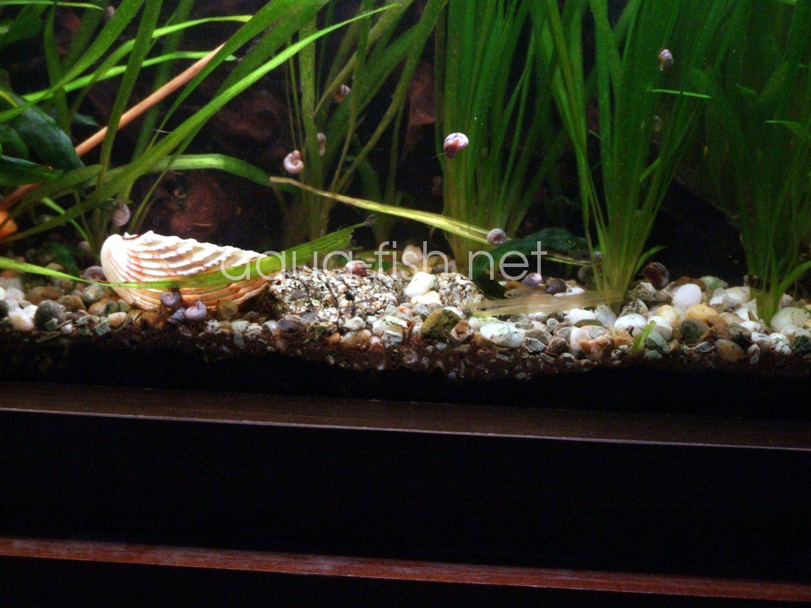 how to clean algae off gravel in fish tank
