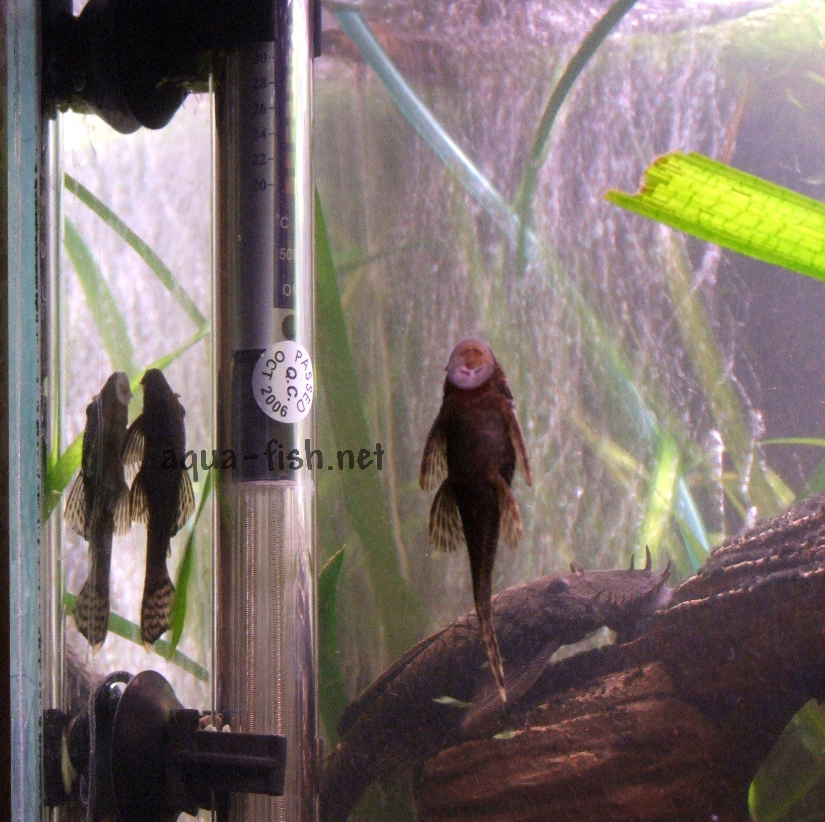 Fish tank electricity cost - Aquarium Heater