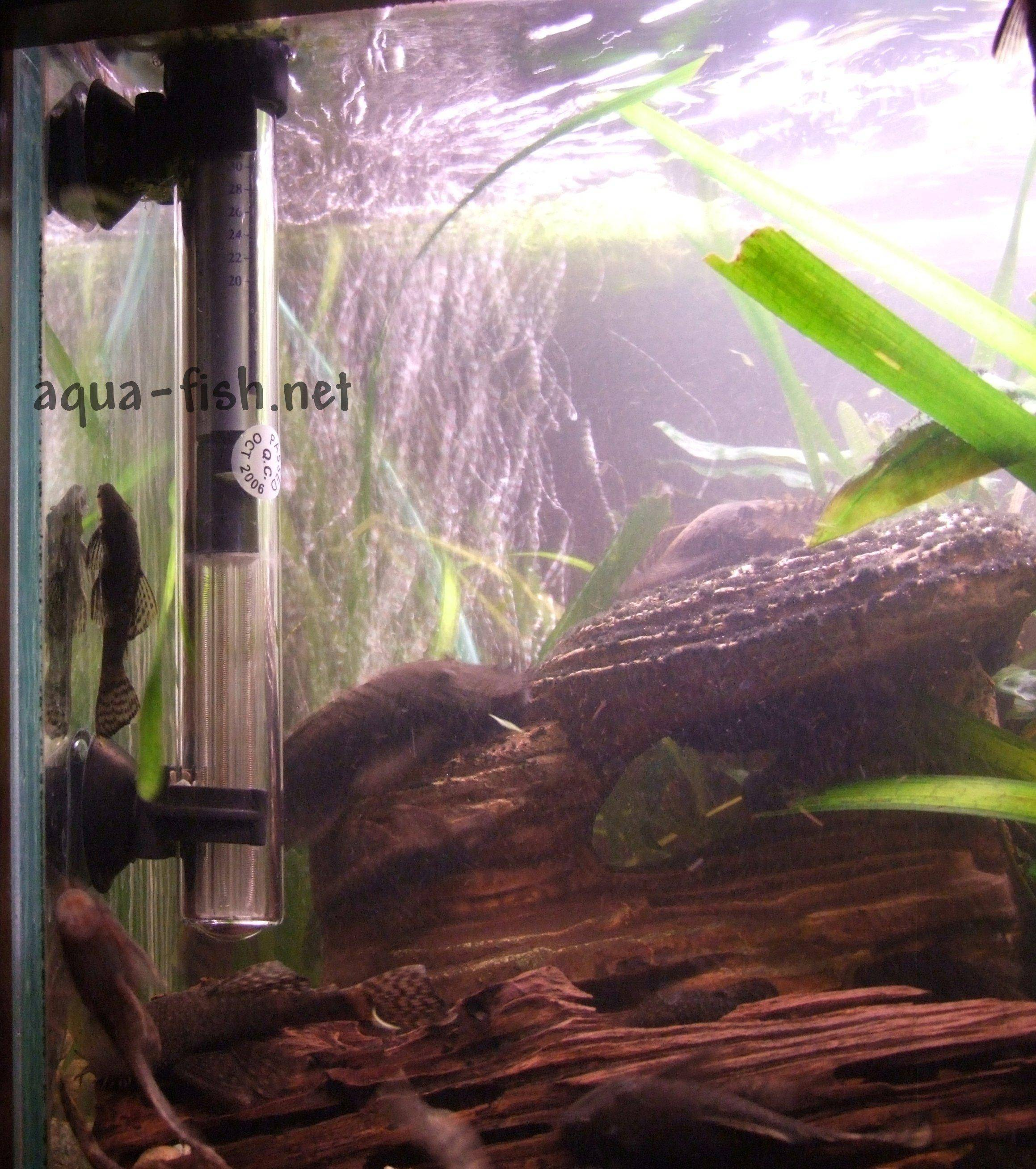 Fish tank electricity cost - Aquarium Heater Aquarium Heater Picture 2