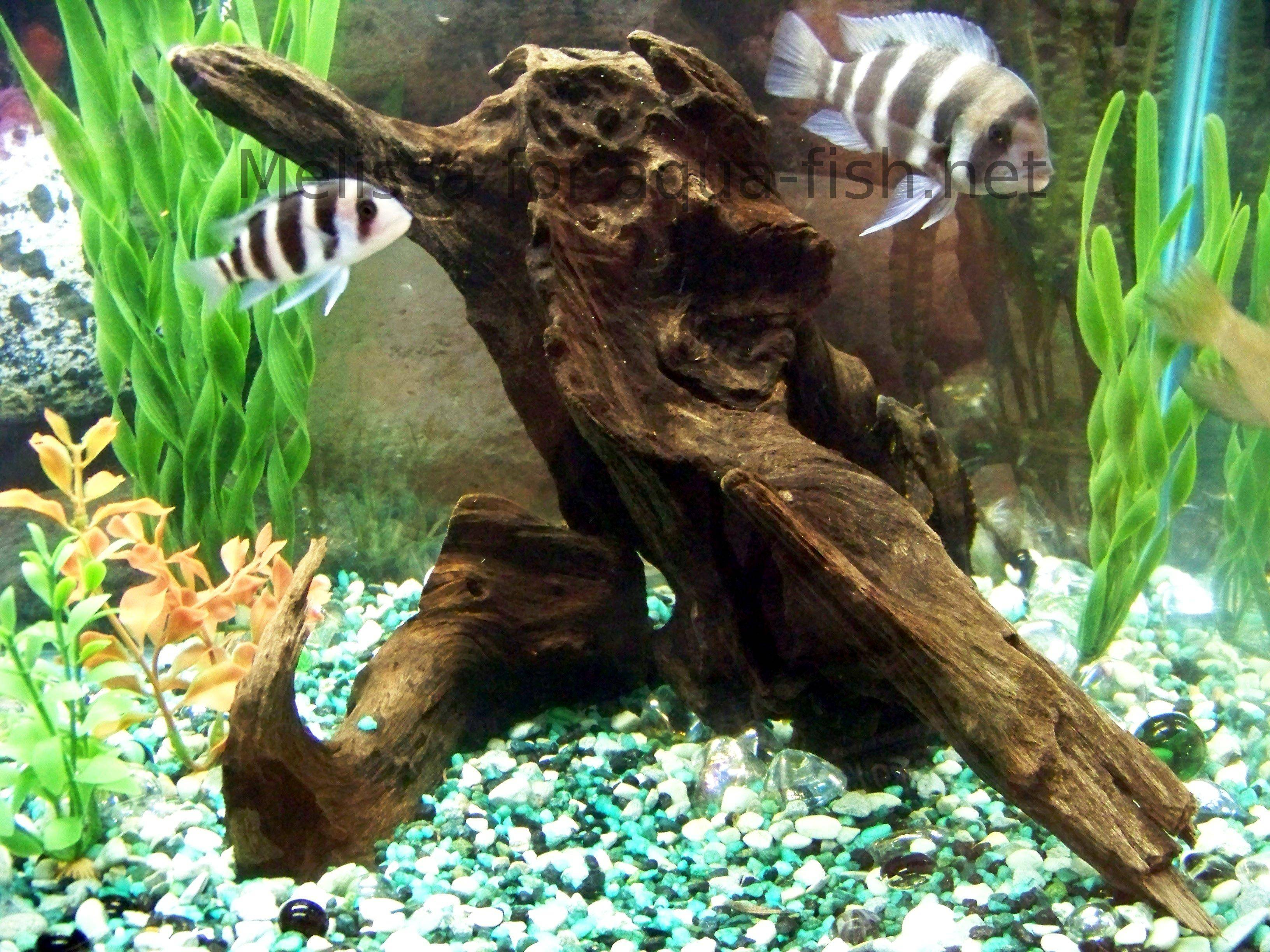 Fish tank wood - Aquarium Wood 1 Aquarium Wood 2