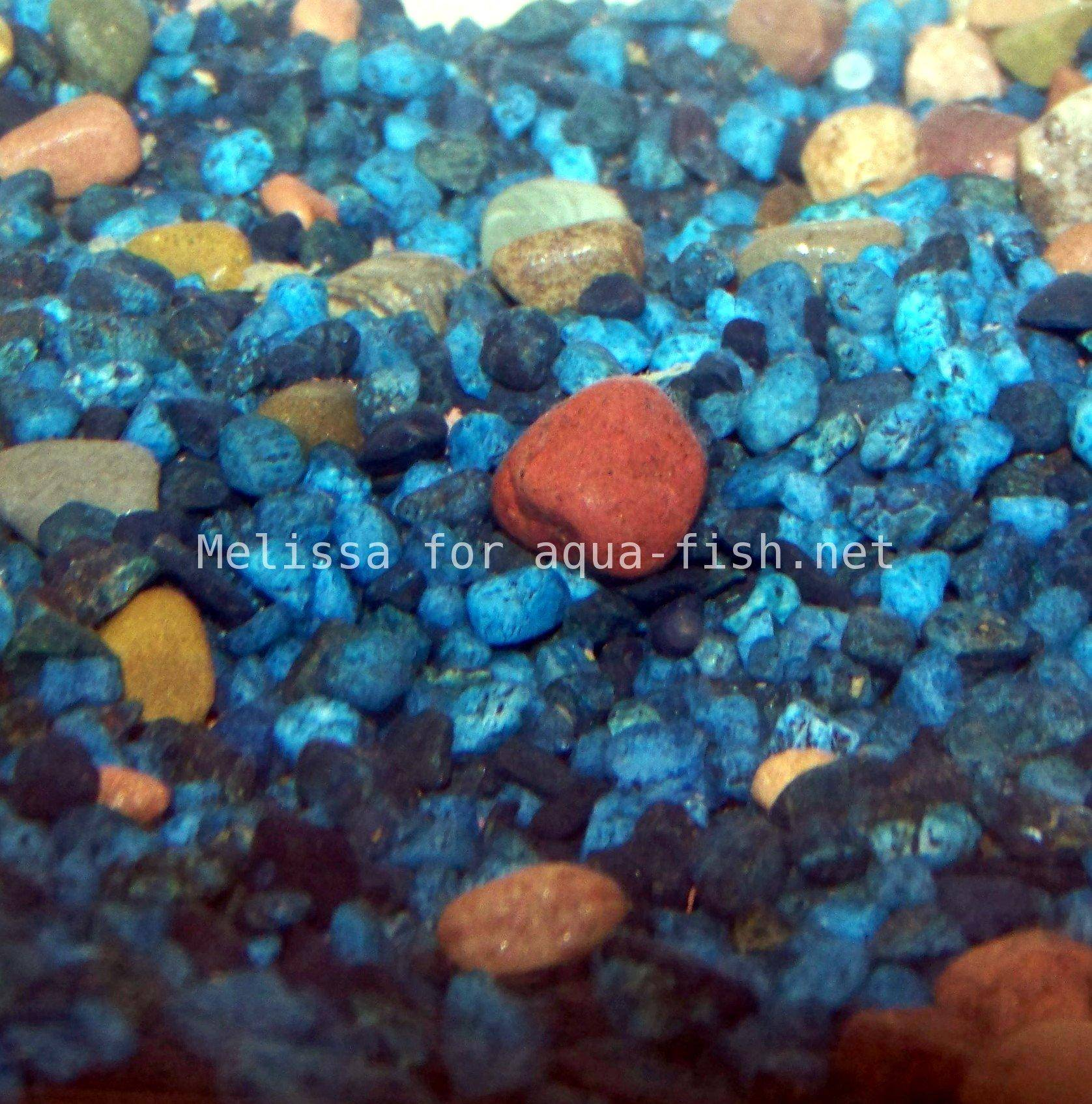 Using rocks in fish tanks with a friendly forum and faq for Fish tank pebbles