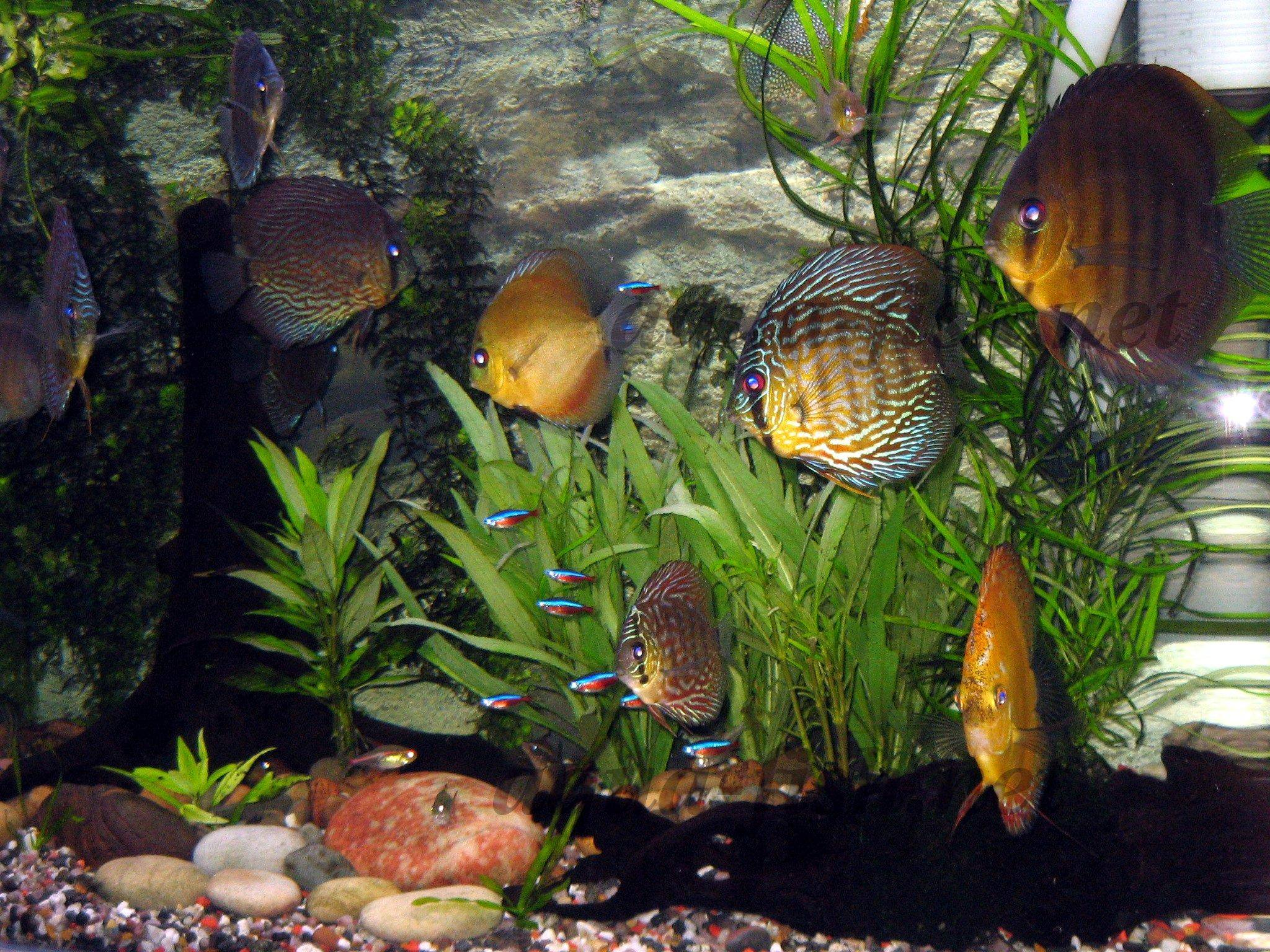 Fish tank Article content