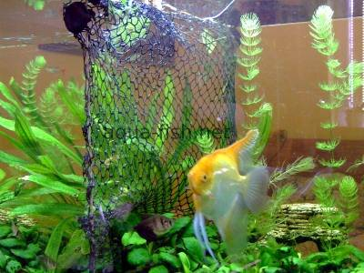 DIY fish tank divider made of fish net