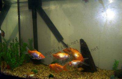 Goldfish Aquarium, picture 1
