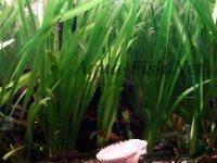 Planted tank, image 1