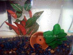 Silk aquarium plant picture 2
