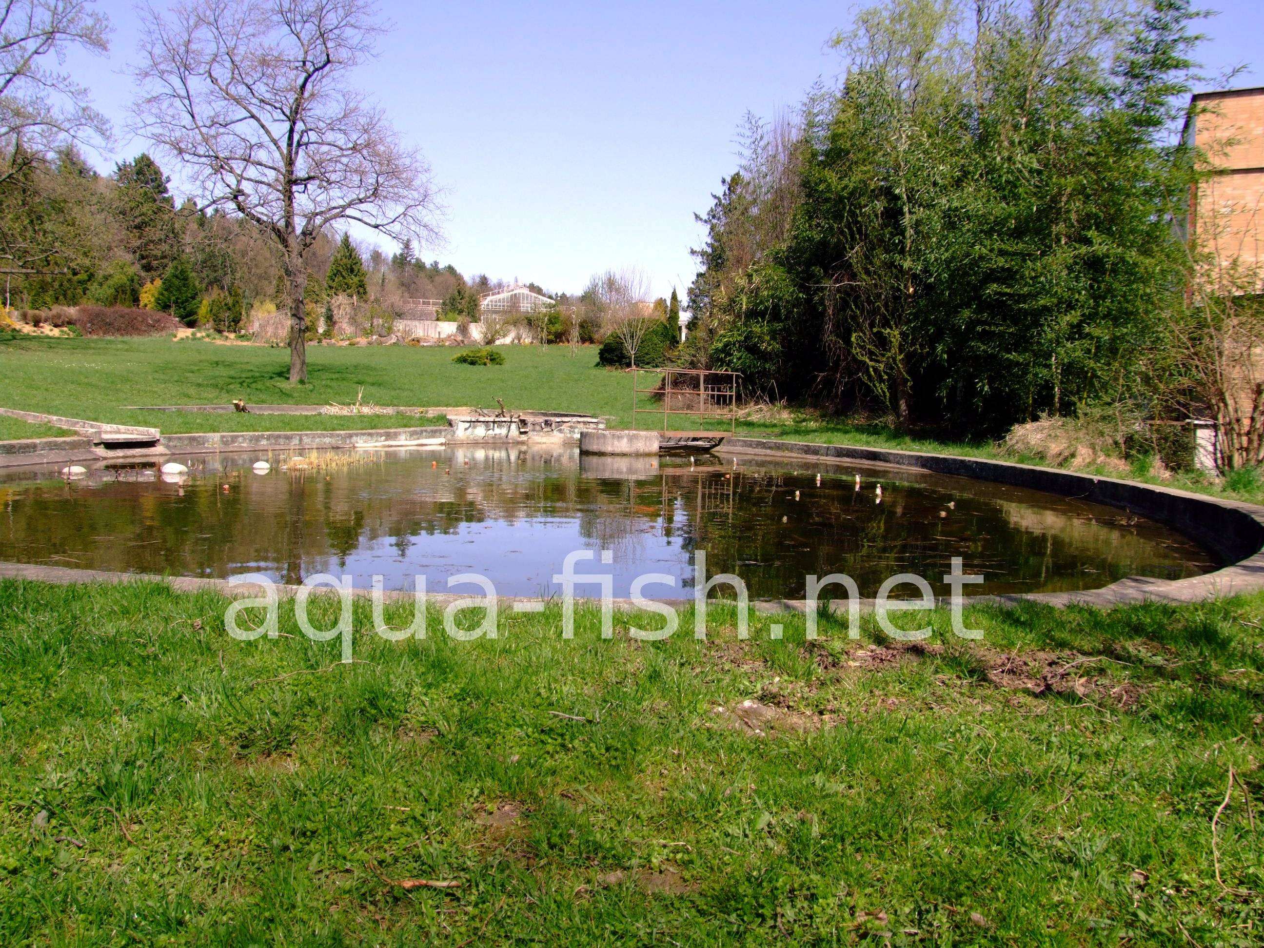 Faq and answers about running a garden fish pond for What fish to put in a pond