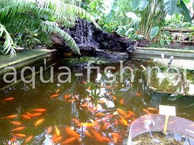 how to build a fish pond part 2