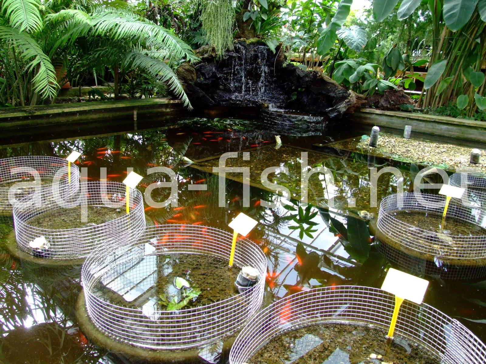 How to build a fish pond for Do it yourself fish pond