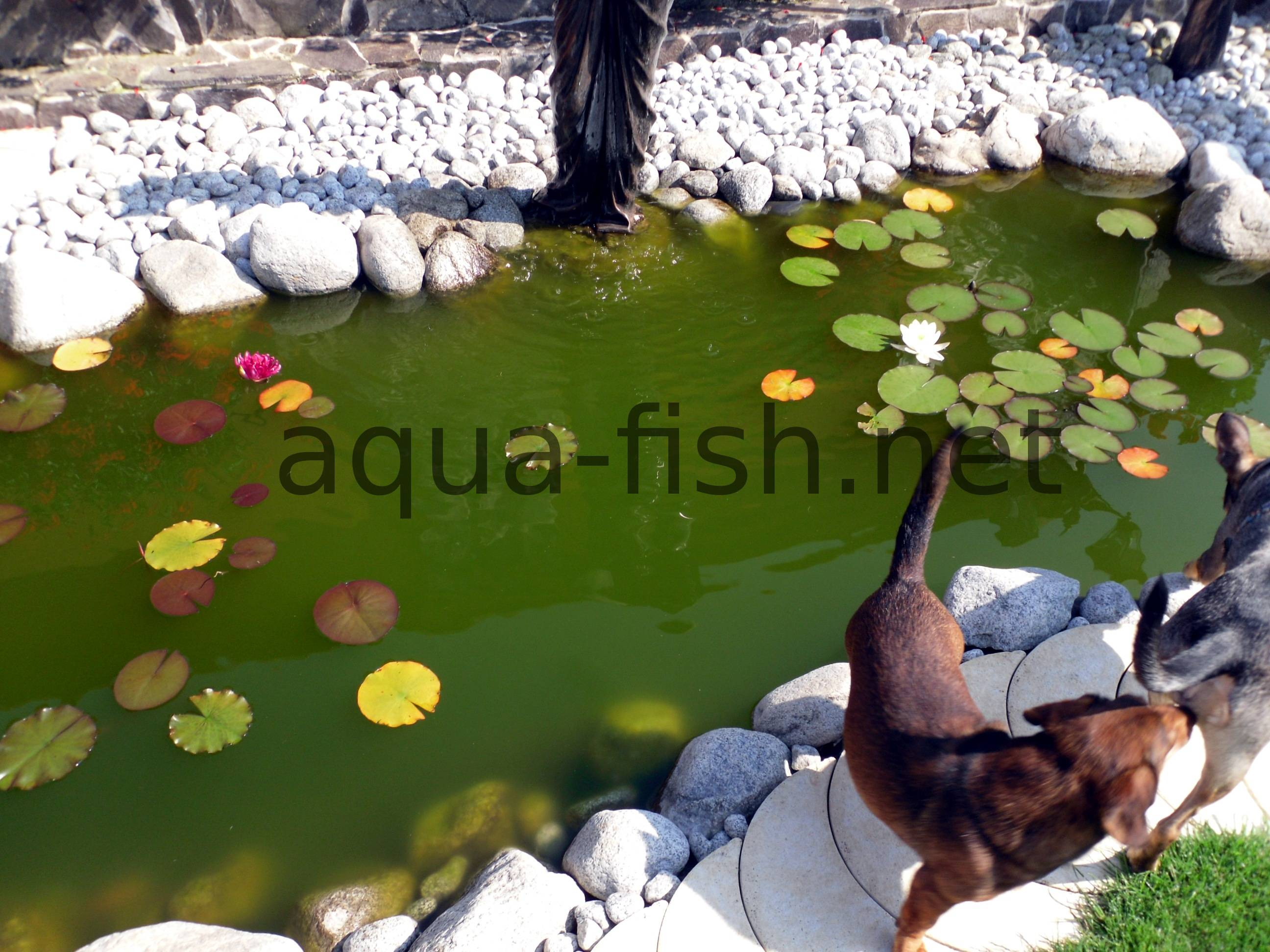 Ideas on building fish ponds along with images and discussion for Garden fish