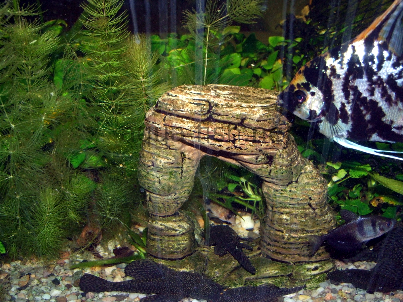 An article and discussion about decorating fish tanks for Aquarium decoration ideas