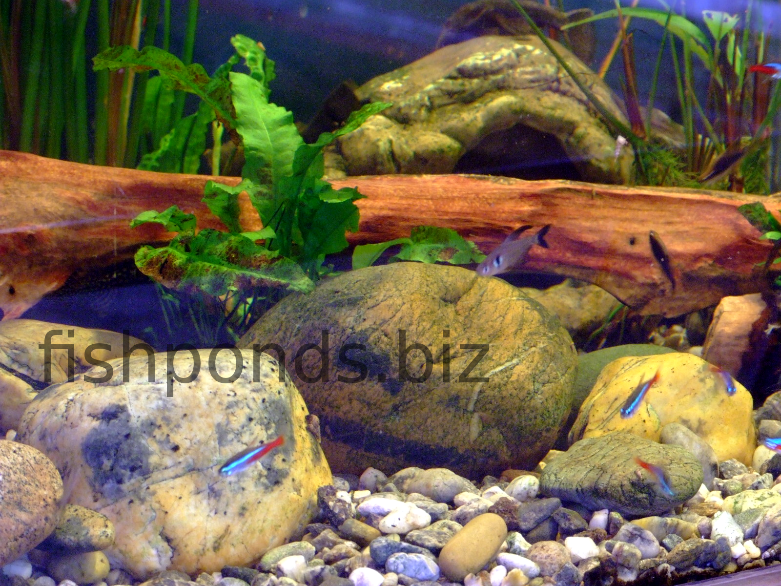 Aquascaping With River Rocks
