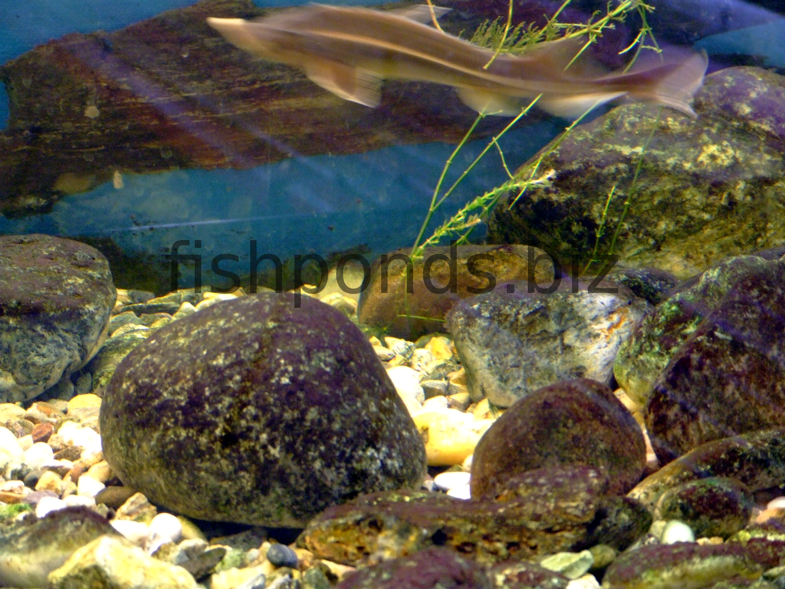 Fish tank maintenance tips rocks fish tanks aquariums for How to clean fish tank rocks