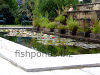Resized image of fish pond, 1