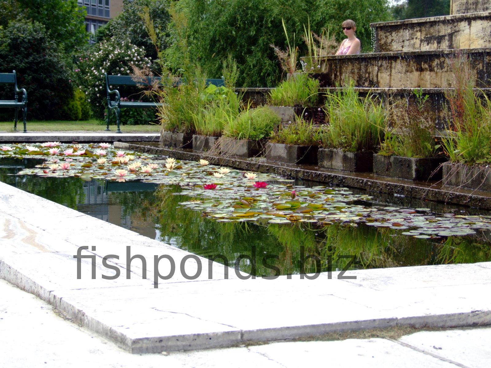 How to build a fish pond for Building a small pond