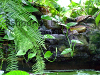 Resized image of pond waterfall
