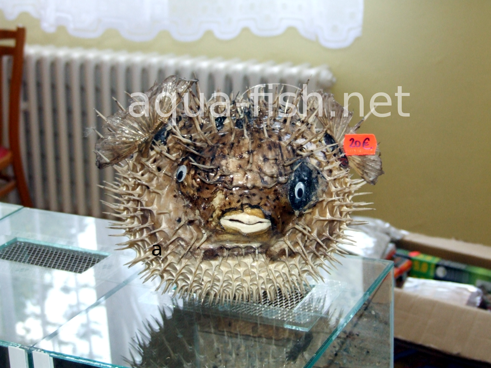 Freshwater aquarium puffer fish questions - Saltwater Pufferfish Saltwater Pufferfish Resized Image