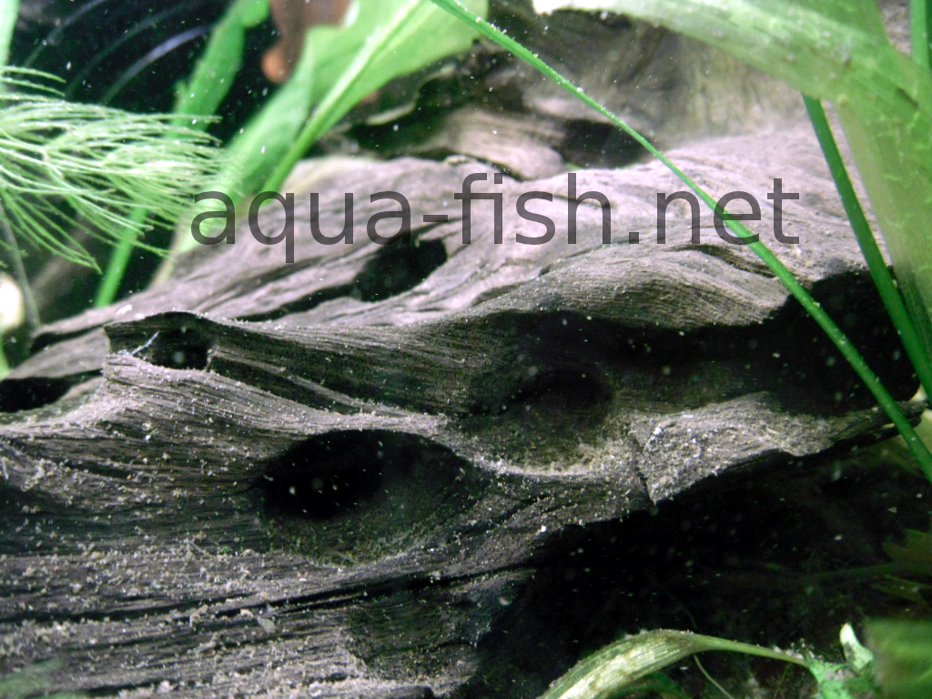 A guide and discussion on placing driftwood to an aquarium for Fish tank driftwood