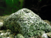 Aquarium rock, picture 2, added on Nov 13 2011