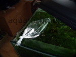 Initial fish acclimatization - bag in tank, resized image 2