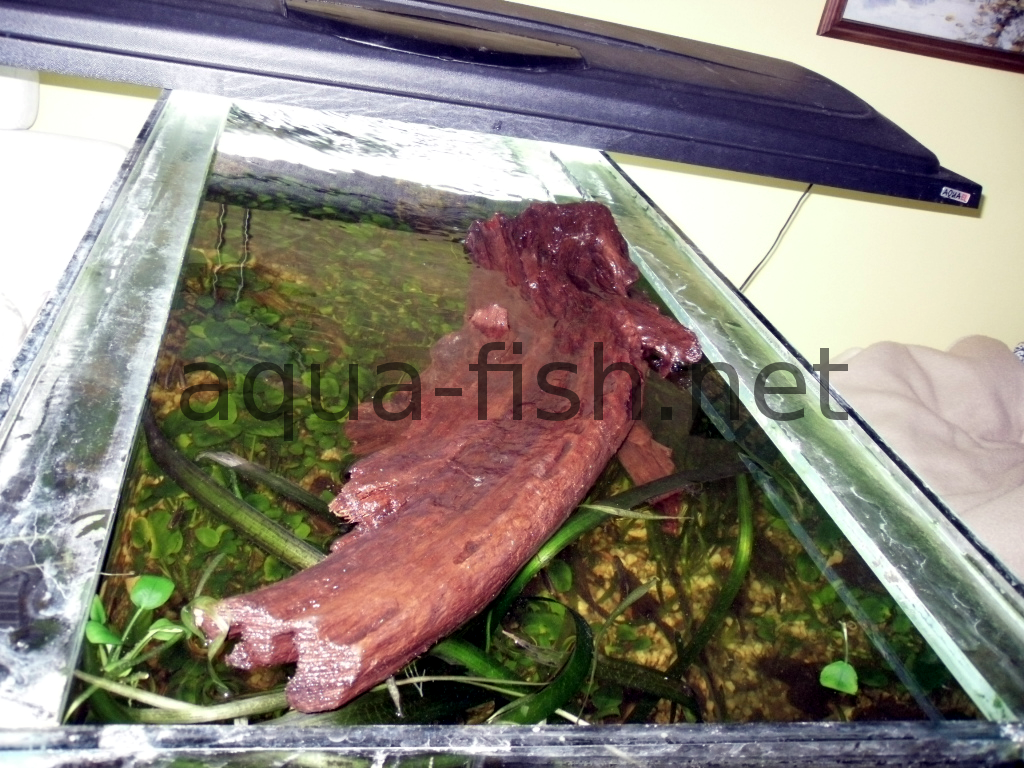 Faq and answers on questions about using driftwood in for Fish tank driftwood