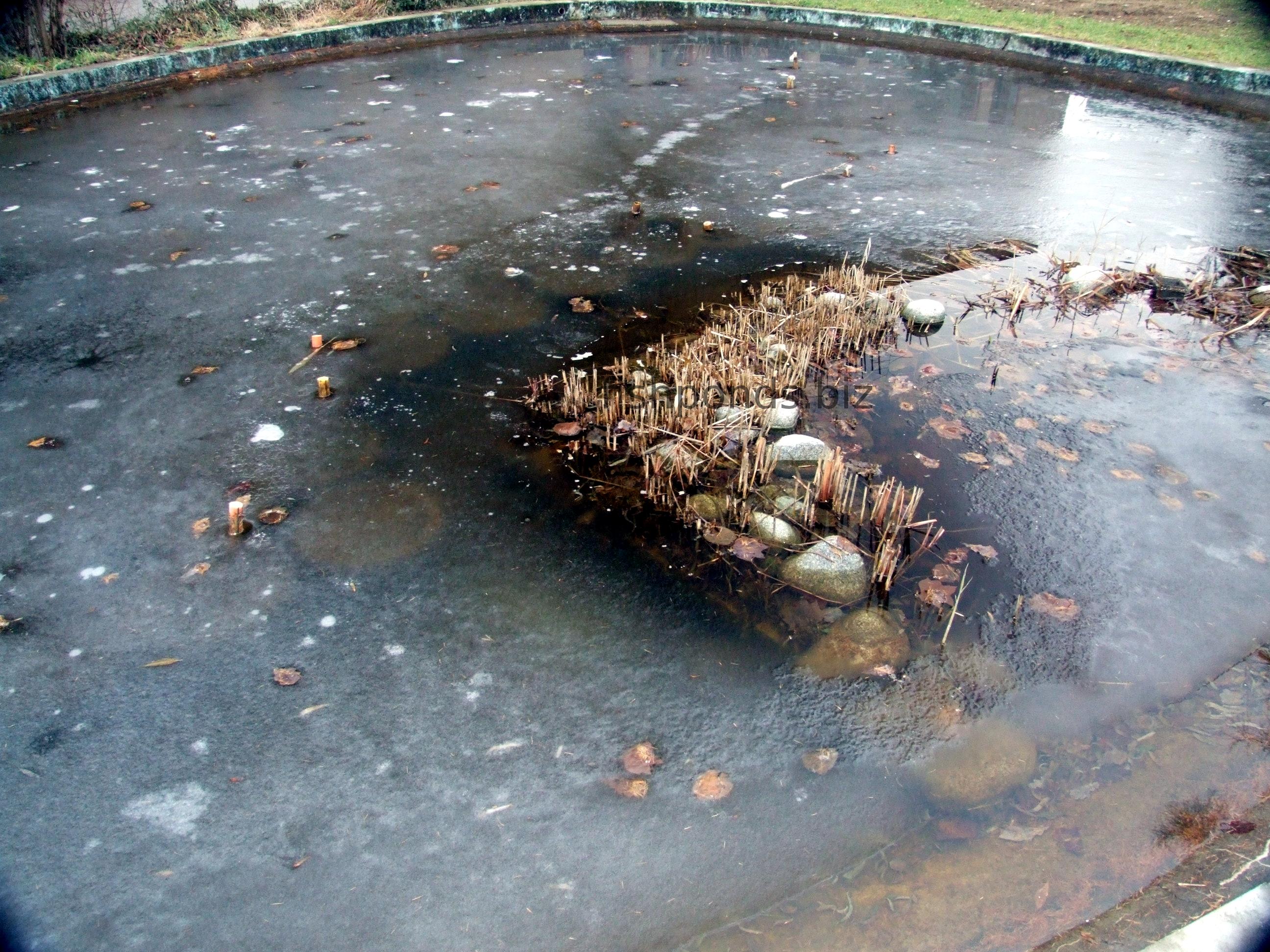 Pond deicer information for Koi pond freezing