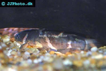 Catfish Stream
