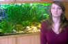 Your professional guide on decorating fish tanks - Susan